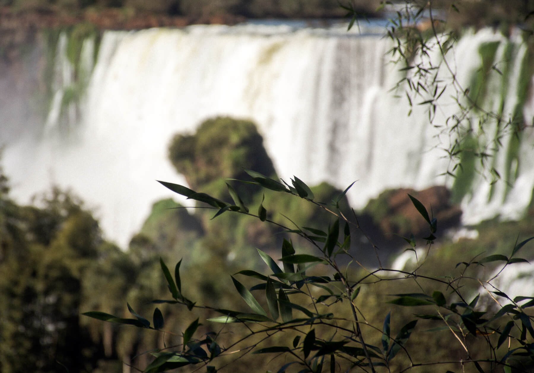 The leaves of a plant focused in the foreground with Iguazu Falls out of focus behind