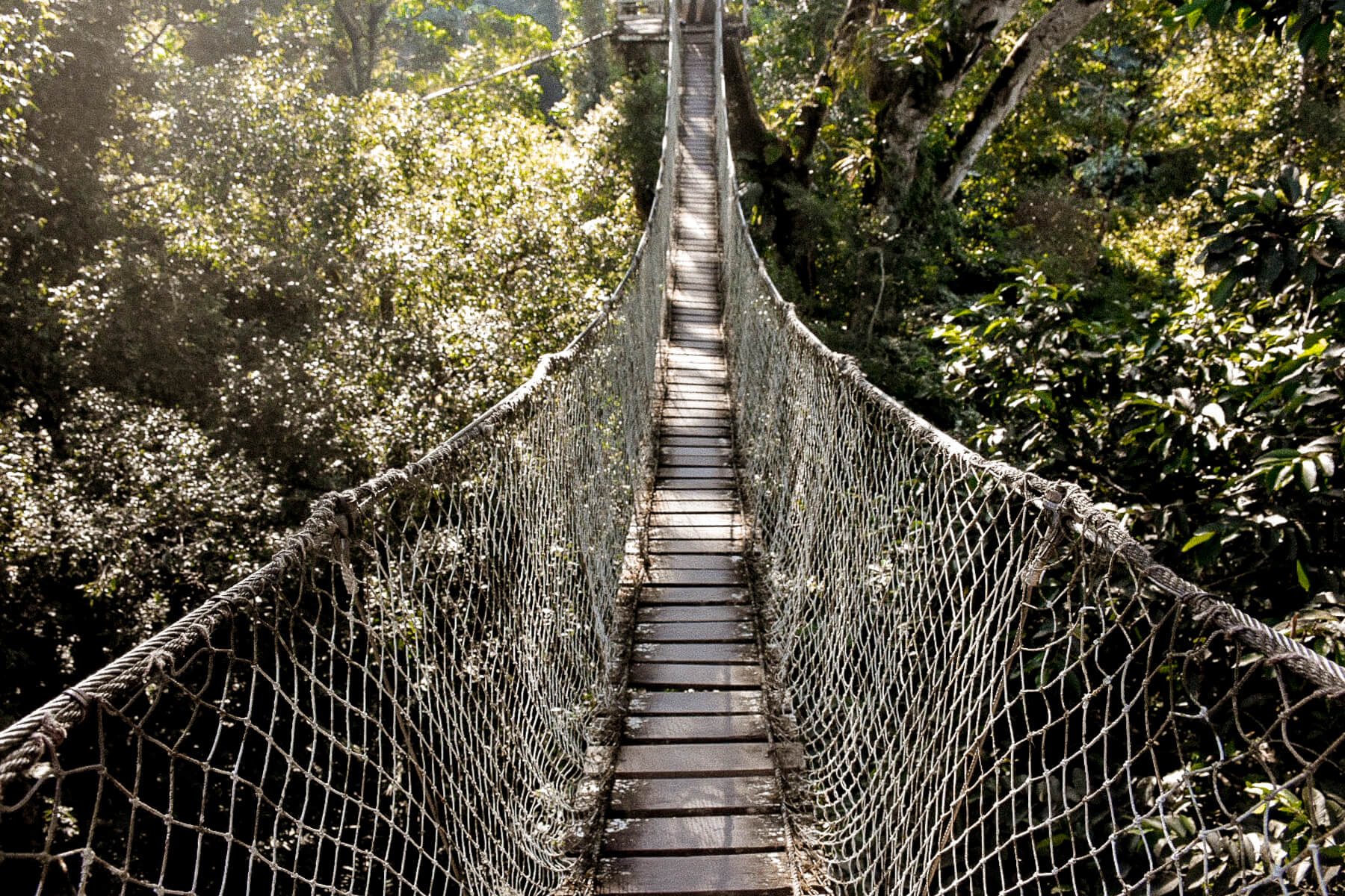 Looking down a huge rope bridge that lies high in the tree tops of the Amazon rainforest