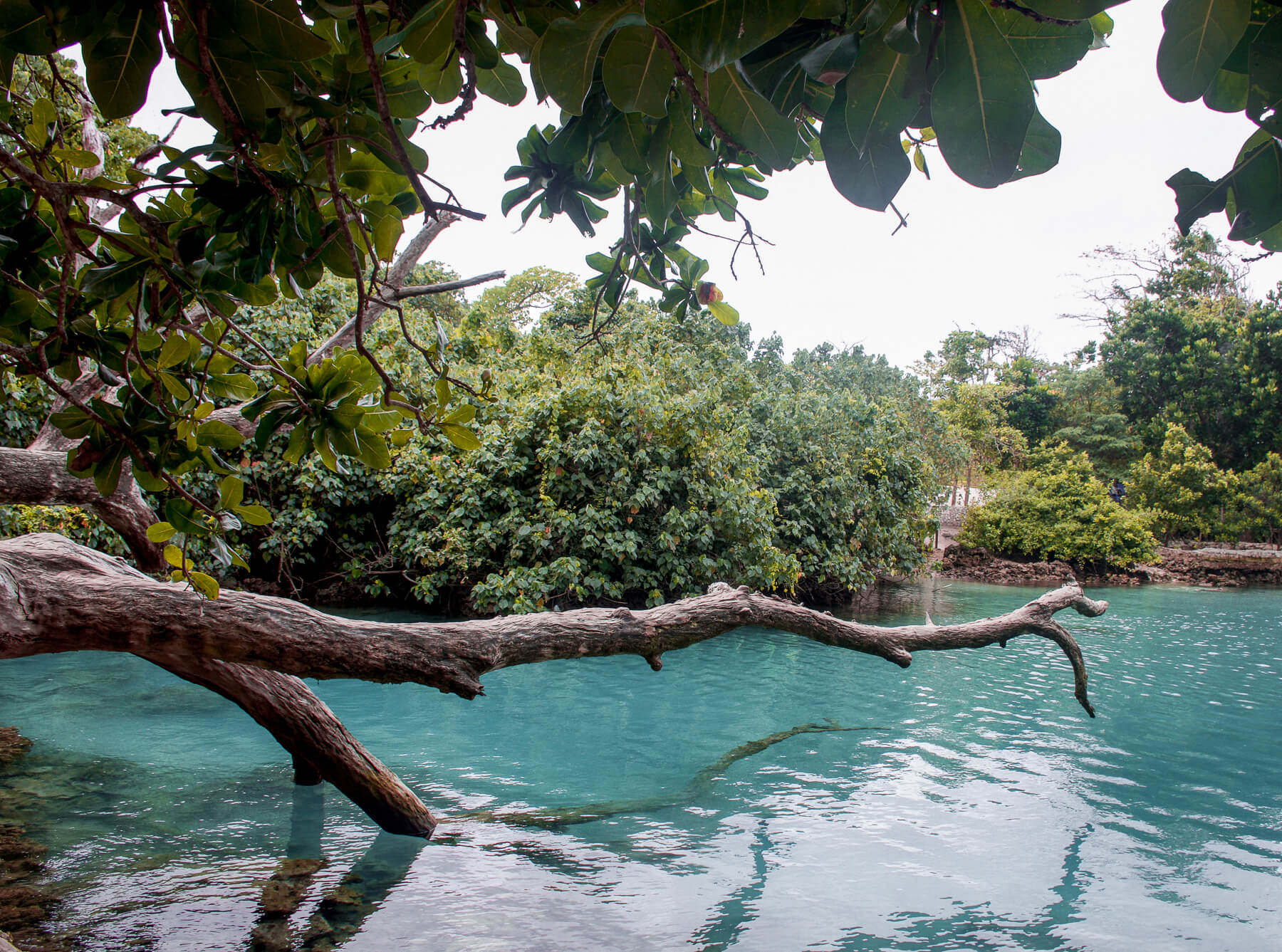 A big wooden branch out over a bright blue lagoon