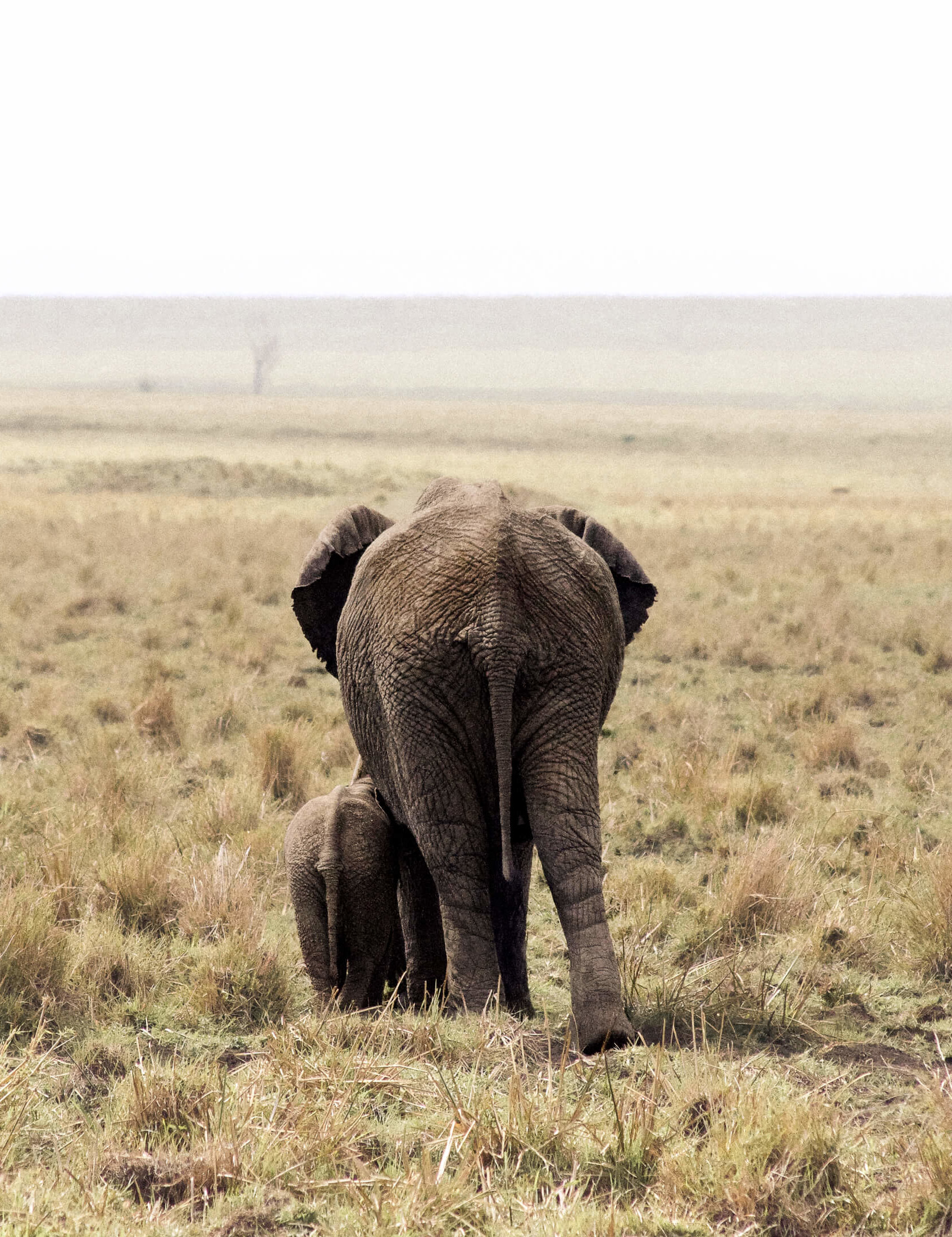 The back of a mother and baby elephant walking away from the camera into the horizon - Kenya wildlife photography
