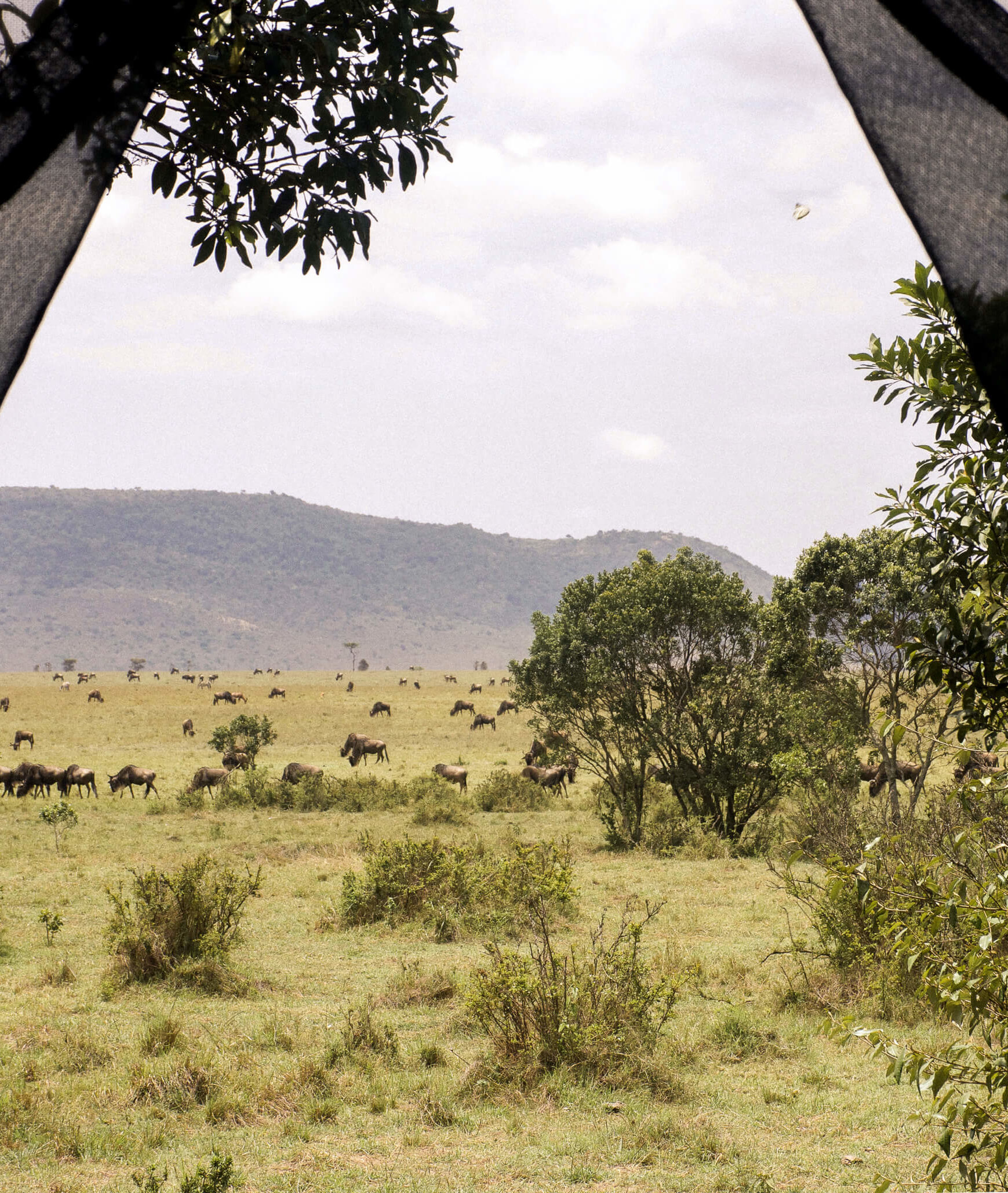 CHECKING IN @ LOSOKWAN LUXURY TENTED CAMP