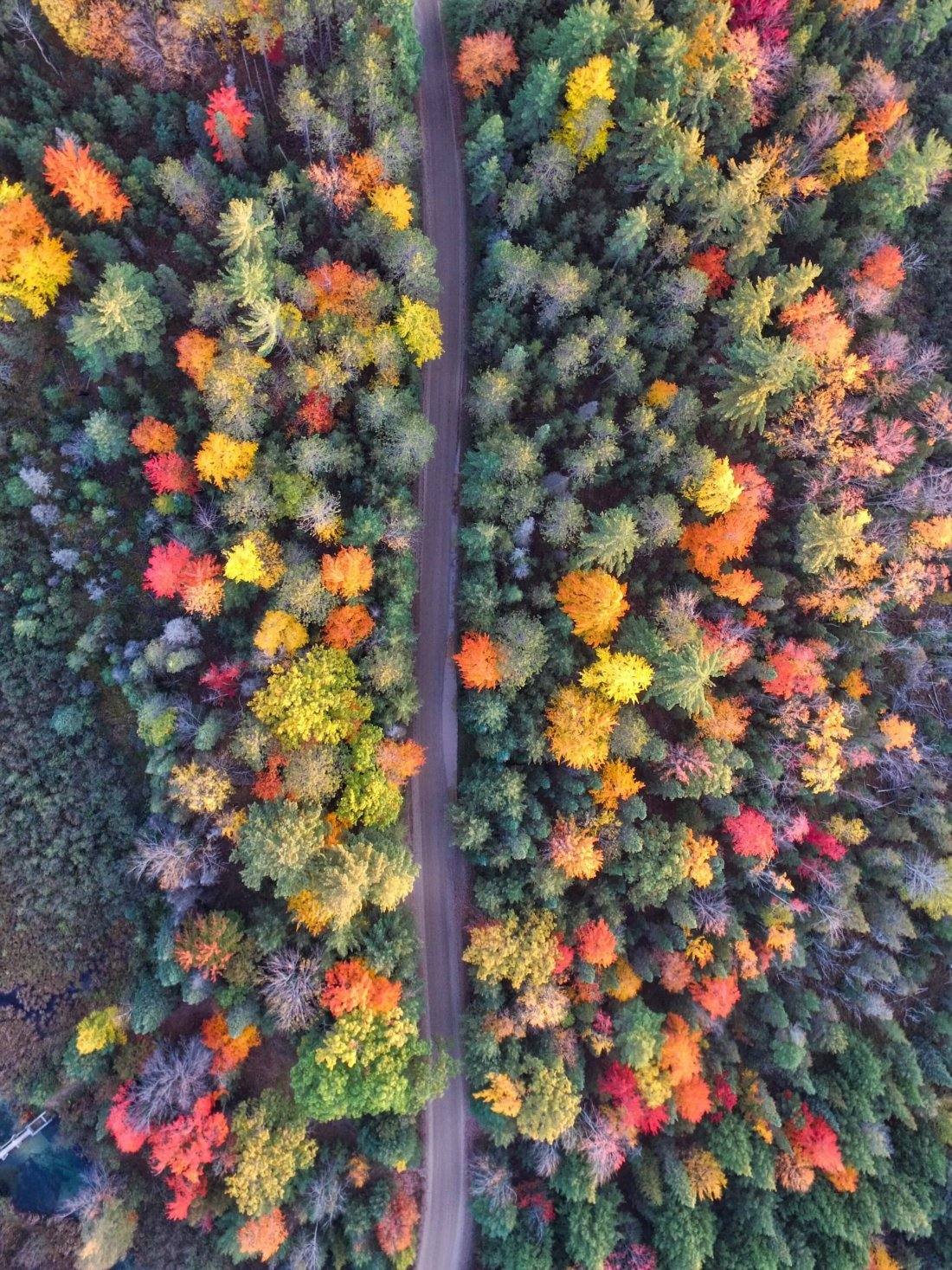Looking down at a road running through the middle of an autumnal forest - red, yellow and green tree tops