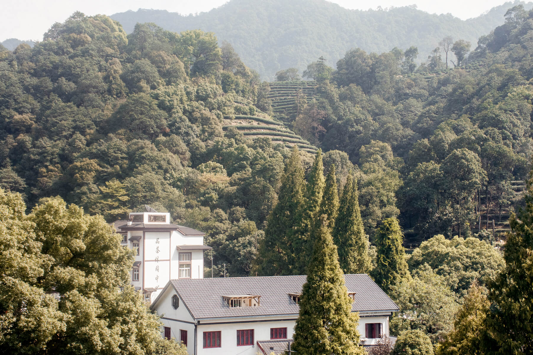 Overlooking the Chinese country side with beautiful white buildings, rolling hills and tea plantations - Hangzhou