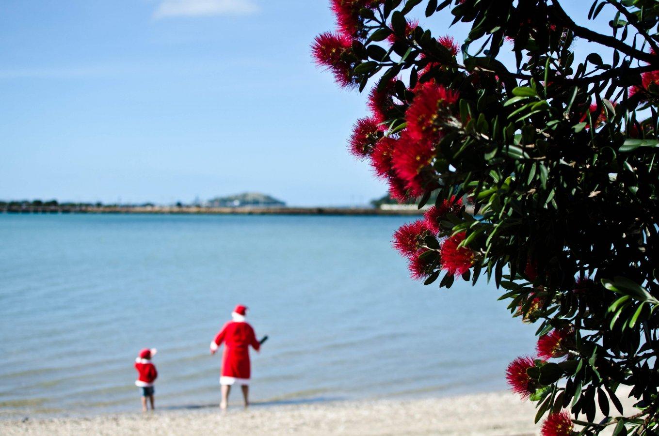 2 Santas on the beach in New Zealand, unfocused behind a wattle tree