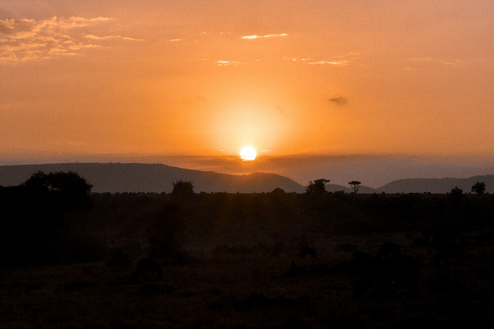 Bright, golden sunrise of the Maasai Mara savanna