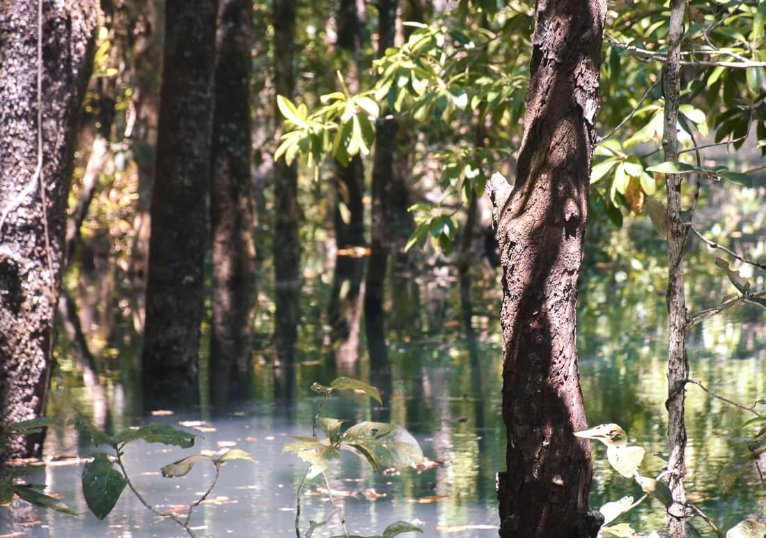 Mangroves in the water along Marrdja Boardwalk