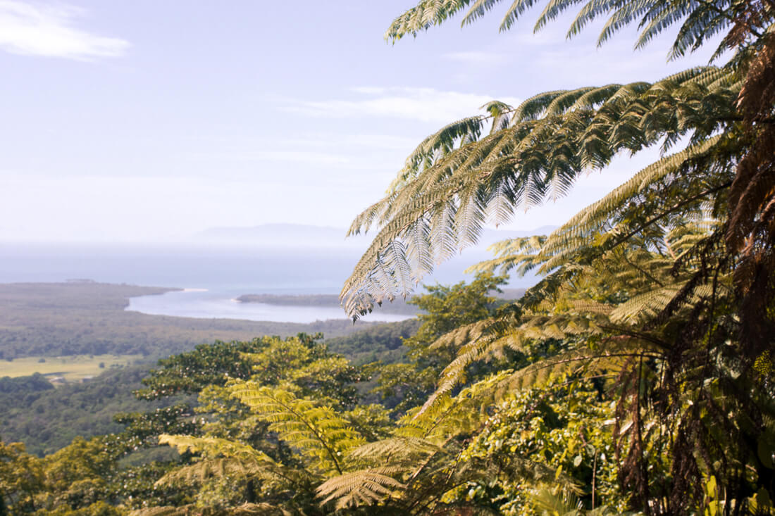 Looking over Daintree Rainforest from Mount Alexandra lookout