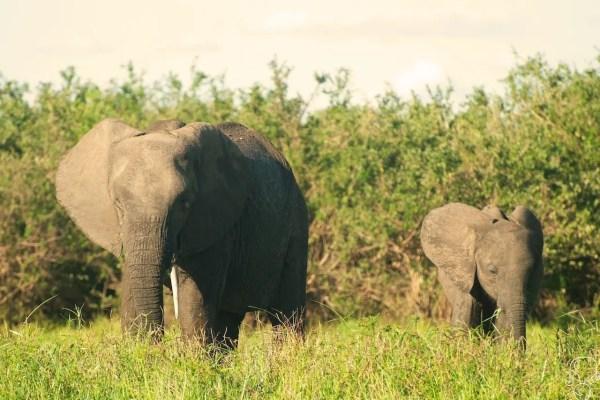 Tanzania: Selous Game Reserve