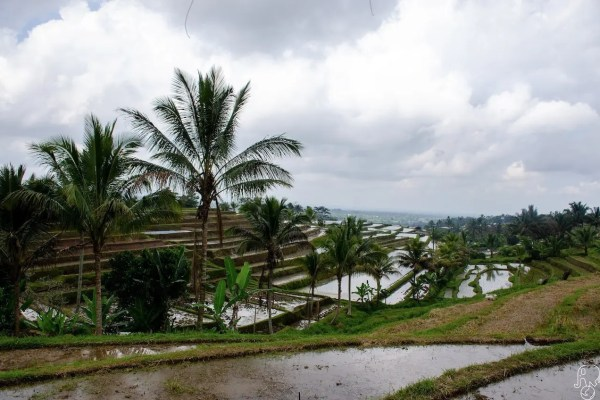Itinerario a Bali: le risaie di Jatiluwih e non solo (Bali ovest)