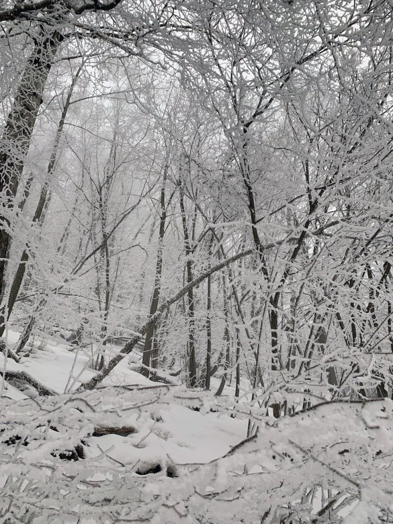 bosco innevato Piemonte