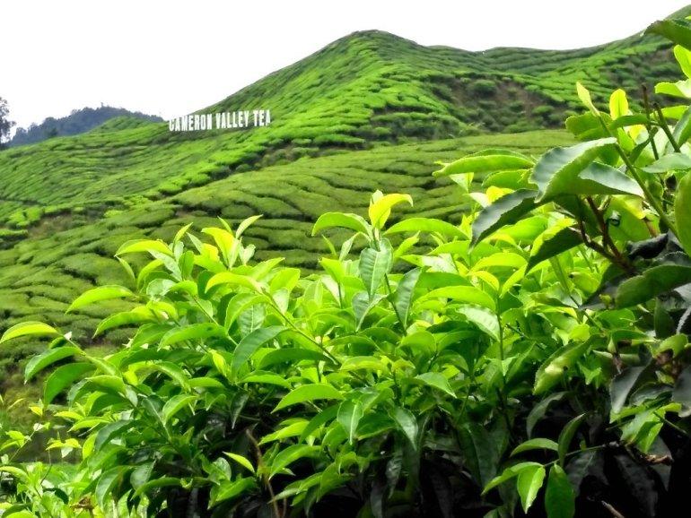 trekking Malesia Cameron Highlands