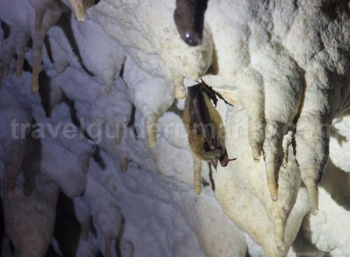 liliac-in-pestera-batranului-muntii-apuseni