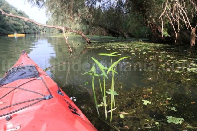 obiective-turistice-din-delta-dunarii-canalul-sontea