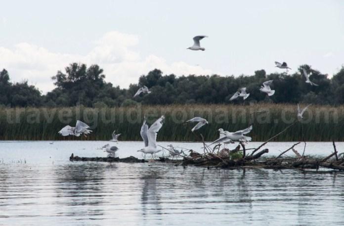 observarea-pasarilor-din-delta-dunarii-turism