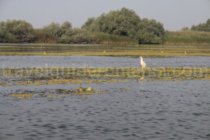 starcul-galben-in-rezervatia-delta-dunarii-observarea-pasarilor-din-caiac