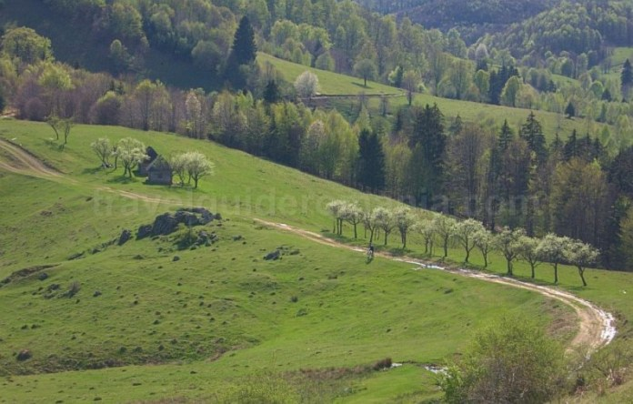 biking Ponoara Padurea Craiului Apuseni