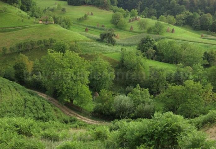 capite Rosia Padurea Craiului Apuseni