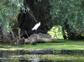 Rezervatia biosferei Delta Dunarii canale