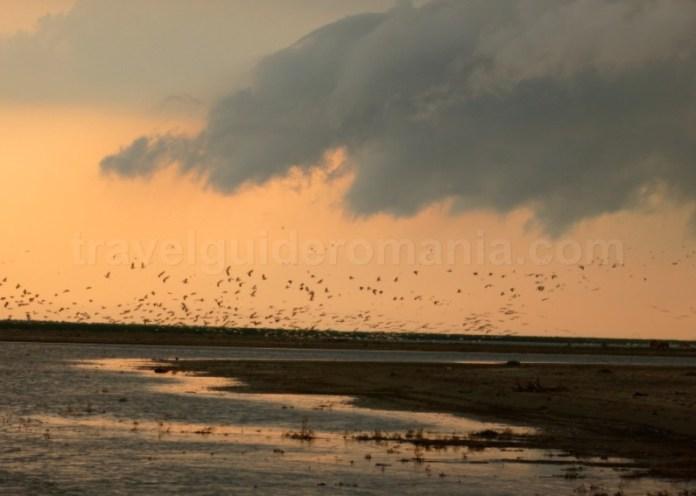 rezervatia biosferei delta dunarii caiac sacalin pelicani