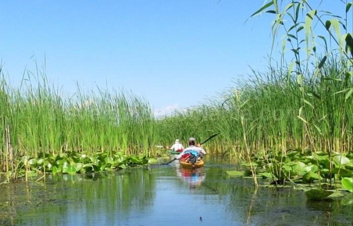 rezervatia biosferei delta dunarii caiac stuf