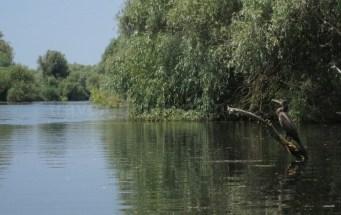 rezervatia biosferei delta dunarii cormoran canal