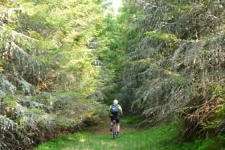 muntii latoritei coborare petrimanu mountain-biking