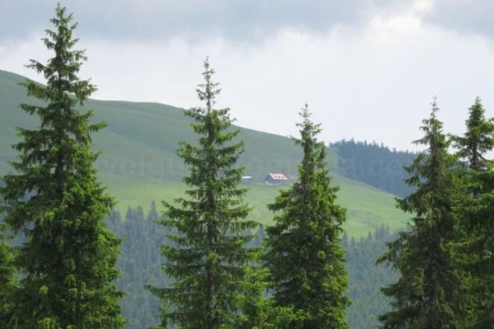 giumalau cabana Destinația ecoturistică Țara Dornelor