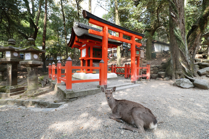 Best places to see in Japan: Nara