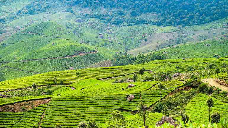 Places to visit in South India: Munnar, Kerala