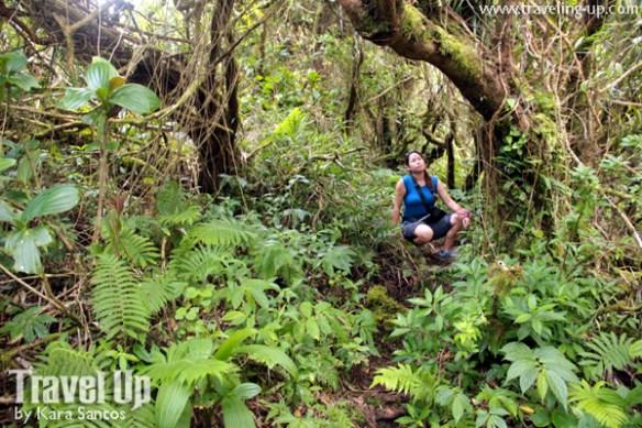 07. mt iraya batanes forest