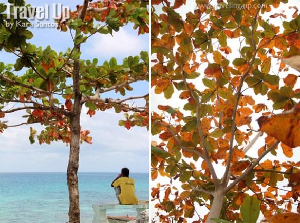 tawi-tawi sangay siapo island tree leaves