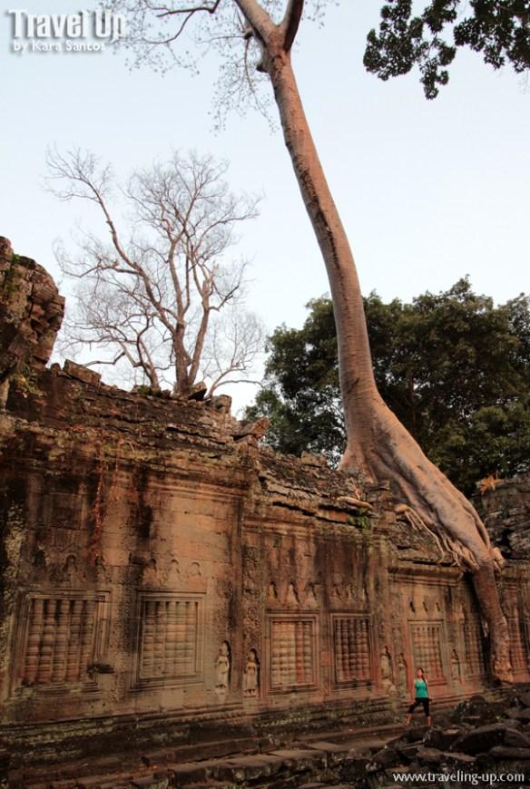 biking day 2 cambodia angkor archaeological park preah khan tree ruins