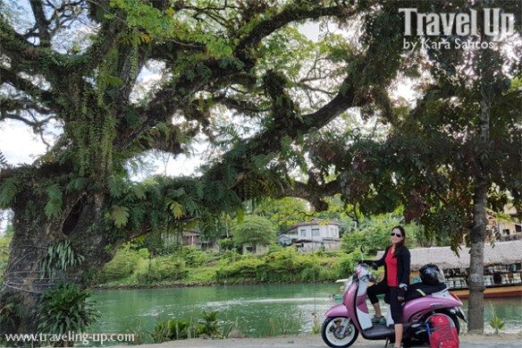 bohol by motorcycle scooter loboc river travelup