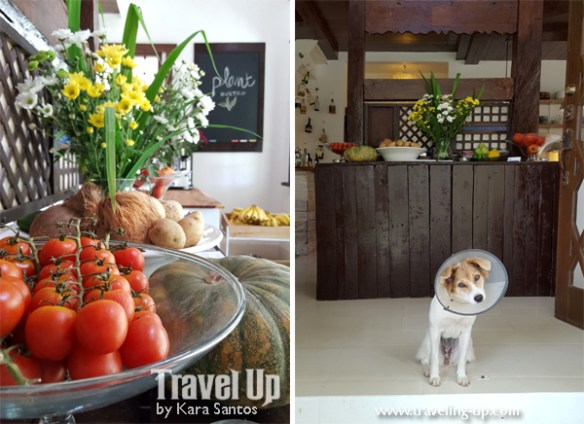 stay at the plant bistro tagaytay tomatoes dog