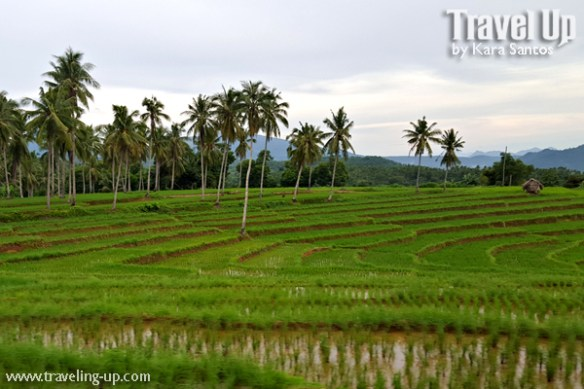 rice-terraces-almeria-biliran