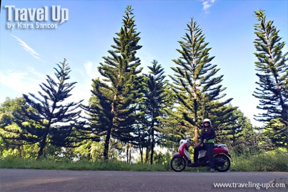 pine-trees-travelup-motorcycle-rizal
