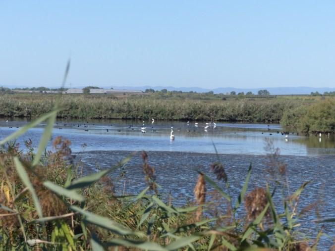 ornithologie réserve du bagnas