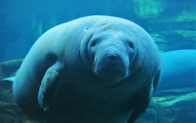 Best Day Trips From Orlando manatees
