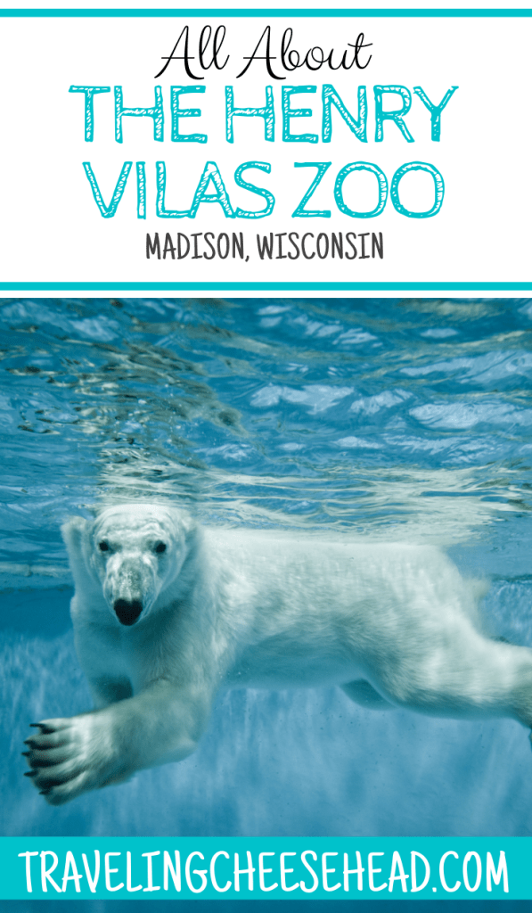 Henry Vilas Zoo Camp article cover image with a swimming polar bear