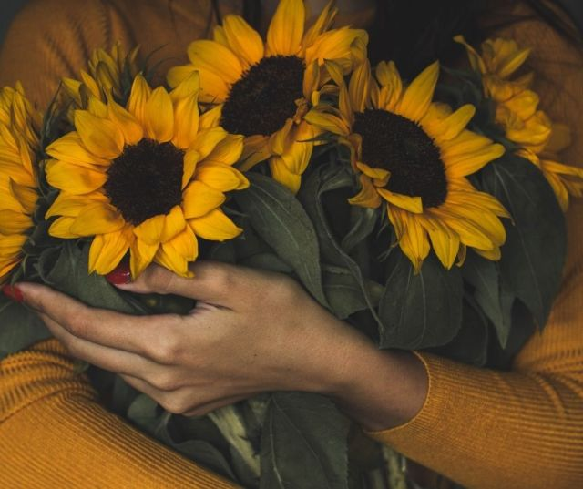 Sunflower Fields in Central Virginia