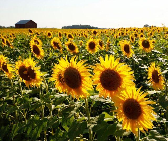 lower Fields in Dayton Ohio