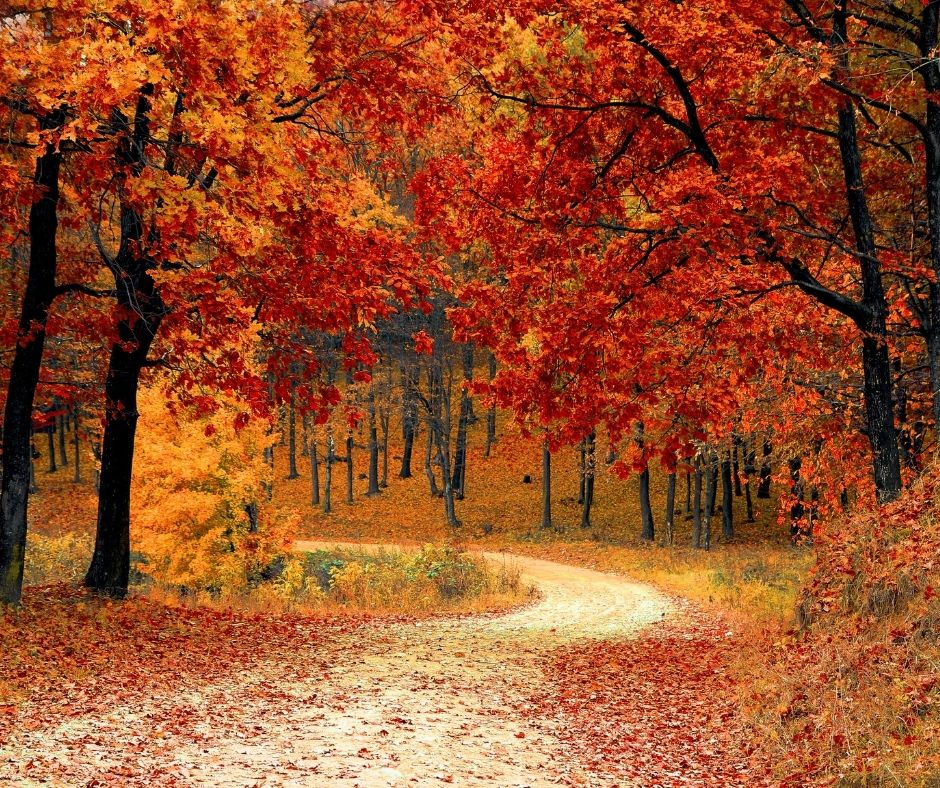 The Best Fall Road Trips Destinations for Scenic Views