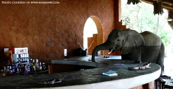 Elephant-bar