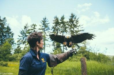Birds Of Prey, Duncan Birds of Prey, Raptors, Duncan Raptors, Cowichan Valley Activities, Vancouver Island Birds Of Prey, Raptors,