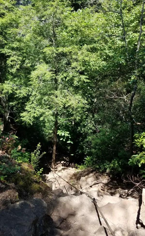 Fall Creek Falls Cable Trail