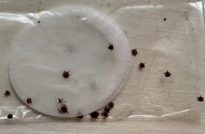 lone star tick red meat allergy