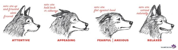 Unleashed dogs ear language