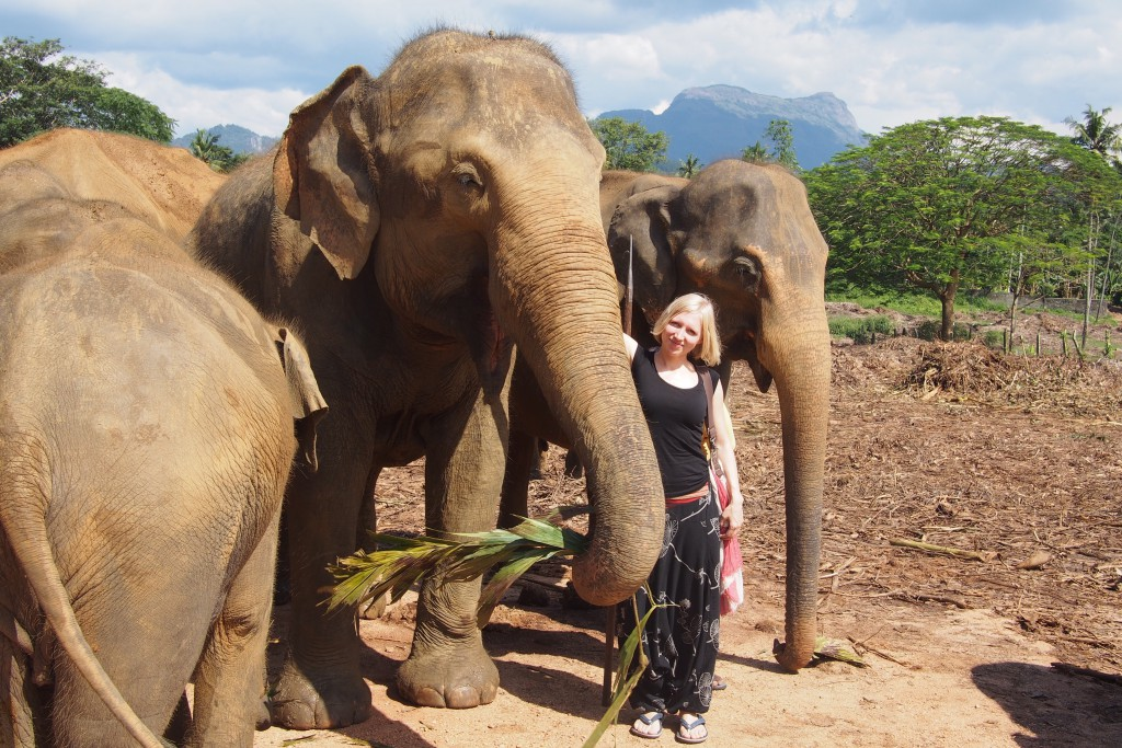 Elefantenweisenhaus