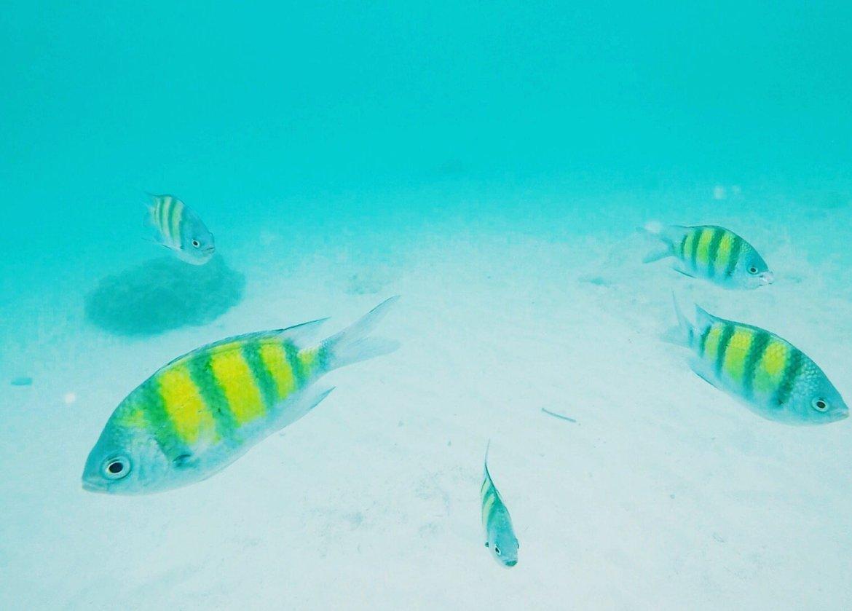 underwater fish snorkeling