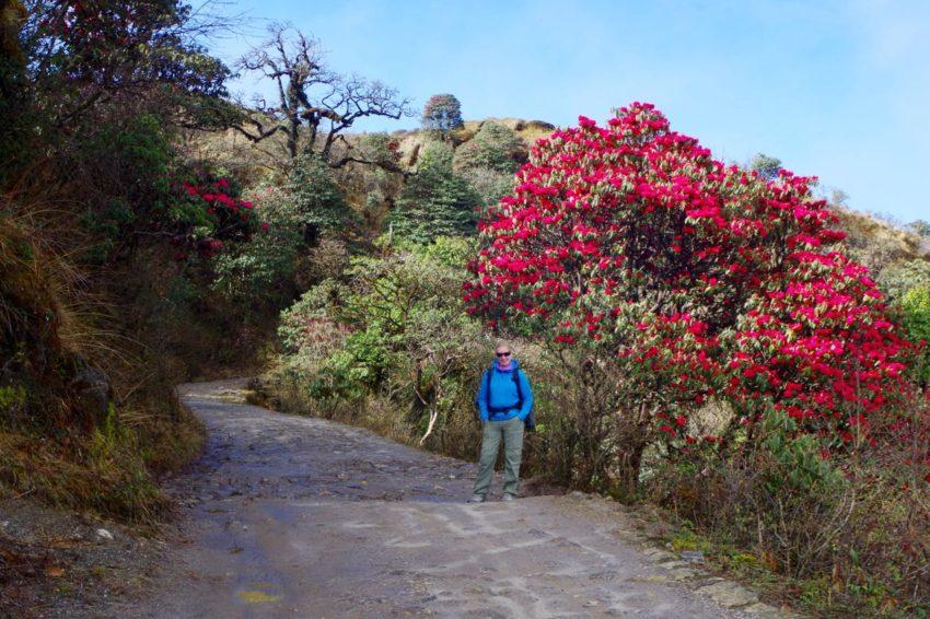 Darjeeling-Singalila